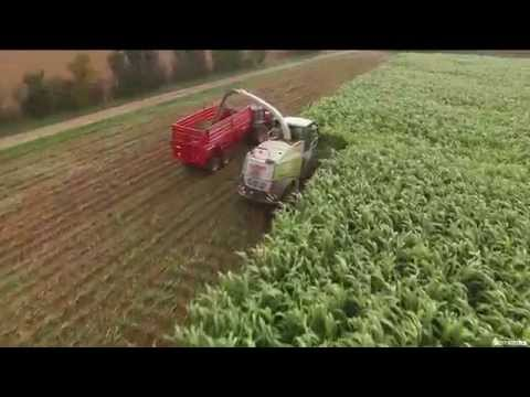 Réalisation Films Vidéo produit , Récolte  Sorgho ensilage BMR de Semental