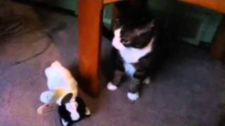 SpaZZ don't like stuffed animals. Thumbnail