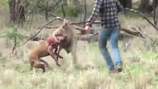 hombre vs canguro jajajaja