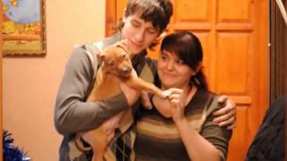 Альтаир - щенок питбуля / Altair - pit bull puppy