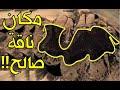 ناقة النبي صالح التي خلقها الله من الصخر لقومه فكفروا وقتلوها  فبكت وصرخت وهنا حدثت المفاجأة المرعبة