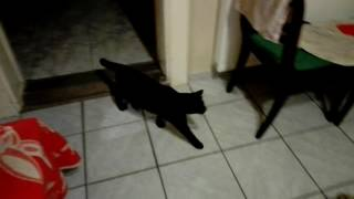 Cute blind cat playing with ball
