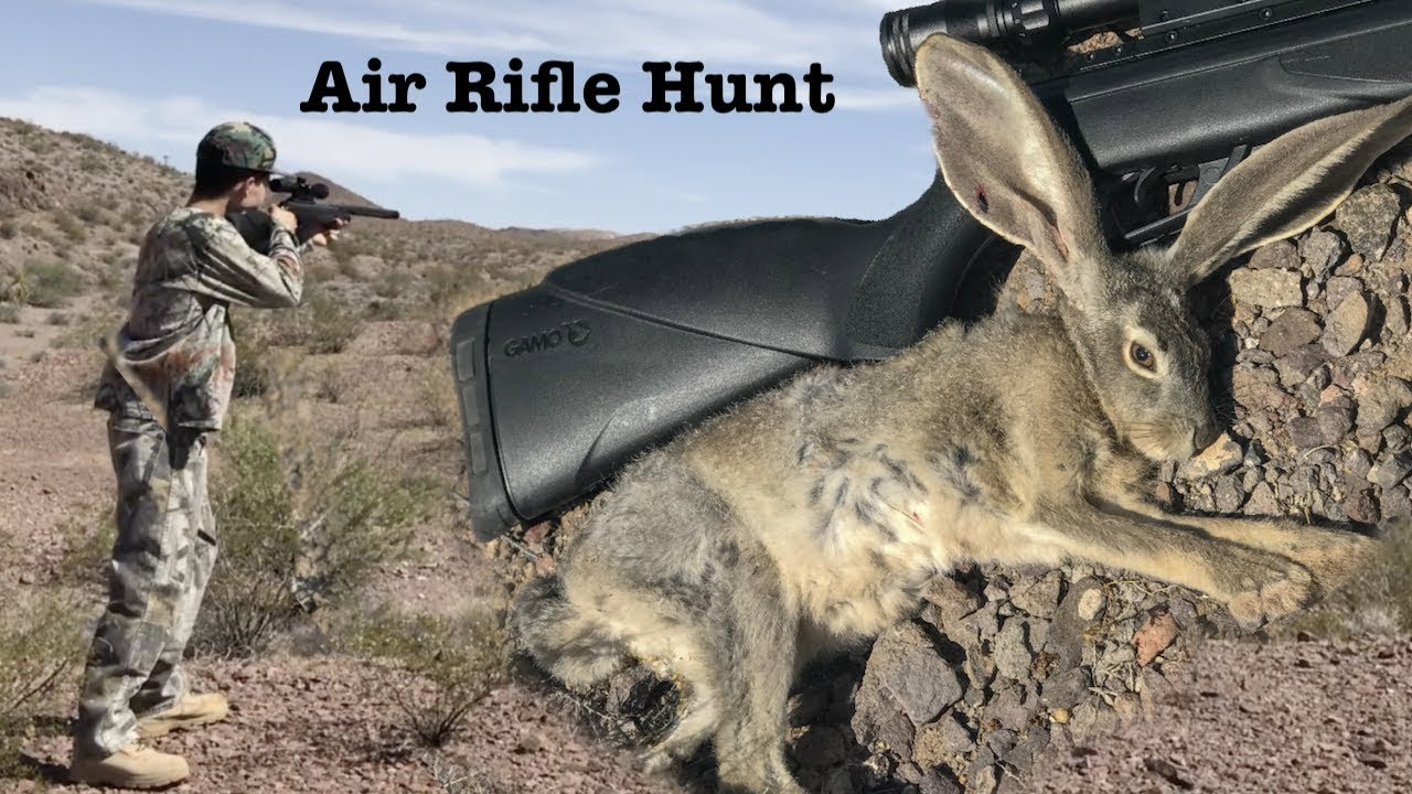 6072c025a431b Rabbit Hunting with an Air Rifle - No License Needed! Sin City Outdoors