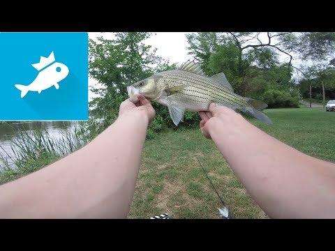 FishBrain, Worth The Hype?
