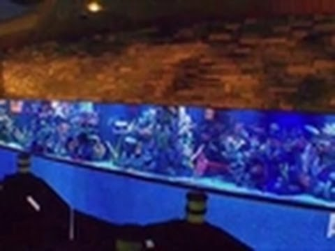 Reveal giant casino tank tanked youtube for Atm fish tank
