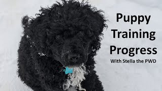 Puppy Training | 8 Weeks of Progress | Portuguese Water Dog