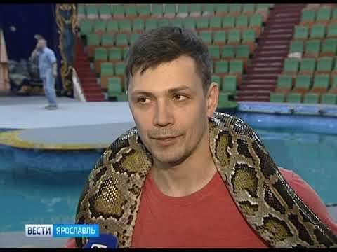 Ярославский цирк превратился в «Остров сокровищ»
