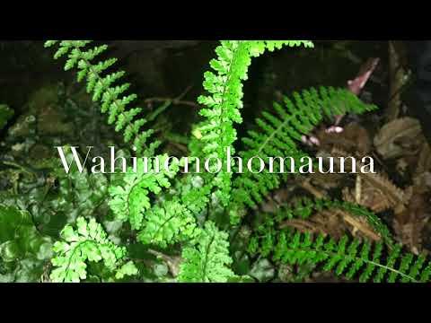 Kipuka Native Hawaiian Plants