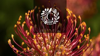 Grootbos | Cape Floral Kingdom - Flowers of South Africa