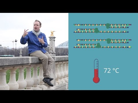 the-theory-of-pcr
