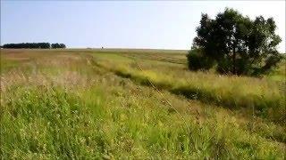 Природа нашего времени. Красота русских полей.(В этом видео вы увидели краски природы российских полей, в наше время такое можно увидеть не везде. Я думаю,..., 2016-02-14T08:56:55.000Z)