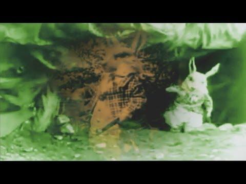 Jefferson Airplane - White Rabbit (Psychedelic video)