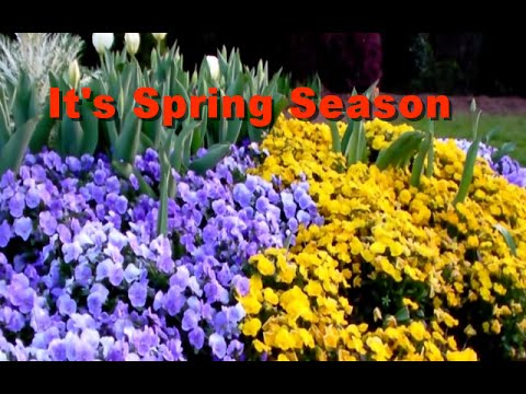 It's Spring Season