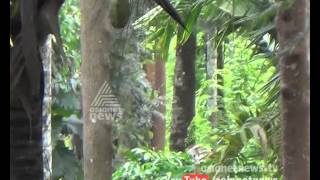Wild animal attack in Wayanad | Kannadi 9 August 2015