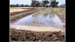 Soils webinar: Stubble fertiliser and water management to reduce greenhouse gas emissions in rice