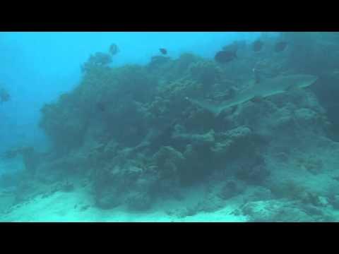 sharks of cocos (keeling) islands
