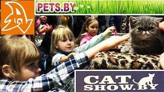 Выставка кошек и котят. Кошачье аджилити. Exhibition of cats and kittens. Cat agility