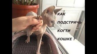 Стрижем коготки у Коси. Как правильно подстричь когти кошке?