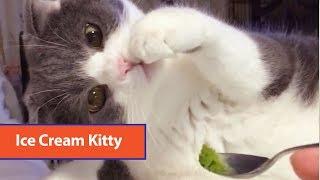 Curious Cat Examines Ice Cream