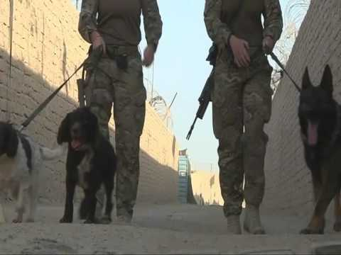 A day in the life of some military dogs and their handlers