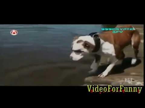 Lo Nuevo En Video Gaciosos - Videos Divertidos, Fails Para No Parar De Reir