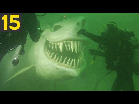 TOP 15 Strangest Things Found By Deep Sea Divers