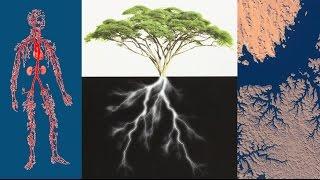 ¿Por qué el diseño ramificado en la naturaleza?