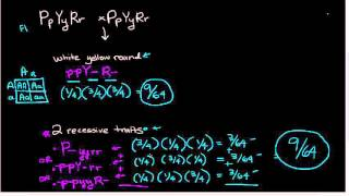 Repeat youtube video Mendelian probabilities - epistasis and trihybrid cross