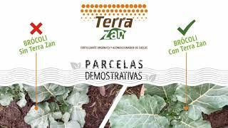 Abono Orgánico Terra Zan | Parcelas demostrativas | Cultivo de Brócoli