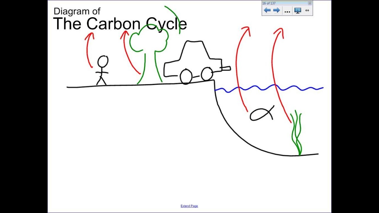 5 2 carbon cycle diagram [ 1280 x 720 Pixel ]