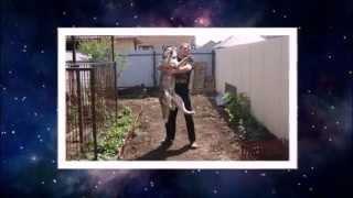 Сибирский хаски - Видео_ART Оренбург