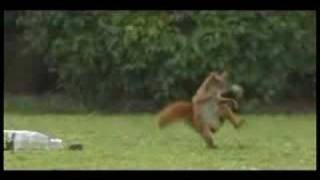 Funny Squirrel Sports Drink Commercial