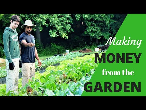 HOW WE MAKE MONEY from our ORGANIC market GARDEN!!