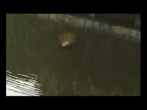 Sludge in Canal from Storm Water Drains off US1