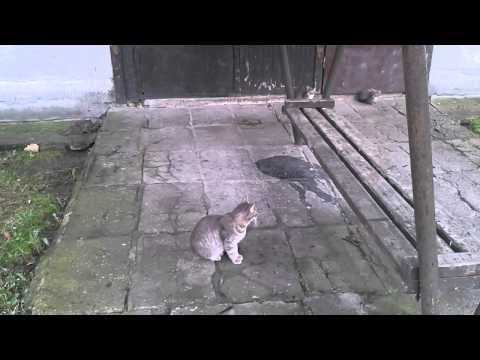 Funny Kittens Playing Jumping Scratching and a Mother Cat Part 2