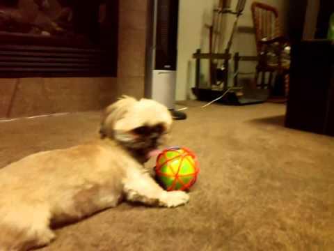 dog-vs-self-bouncing-ball