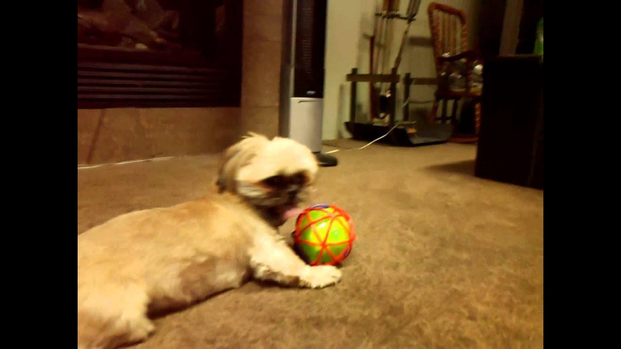dog vs self bouncing ball