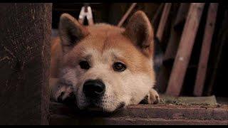 飼っている犬の動画です^・^ よかったらご覧ください^・^