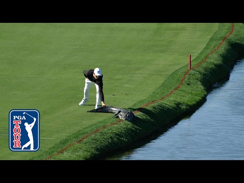 Cody Gribble gets brave and slaps an alligator's tail at Arnold Palmer