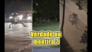 A verdade do vídeo da criatura misteriosa circulando nas ruas da Bahia