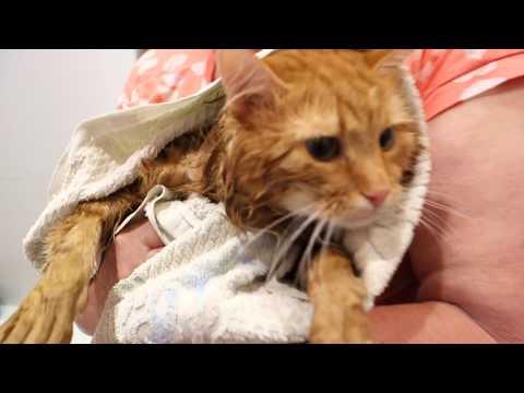 КОТОКУПАЛЬНИК как помыть кота