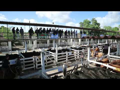 Livestock: Liniers Market, The World's Biggest Mart