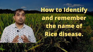 Identify and remember the name of Rice disease.