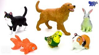Aprender el nombre y los gritos de los Animales Domesticos para Niños|El Sonido de los Animales