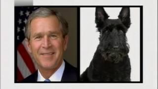 Собаки белого дома