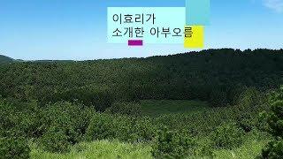 [제주도여행] 아부오름/봄,여름,가을,겨울 제주도여행추…