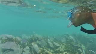 Barriera corallina Messico - GoPro Hd