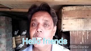 Pigeons... Kabootar k panjay 3...24-7-2018