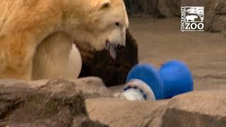 Polar Bear Birthday Party - Cincinnati Zoo