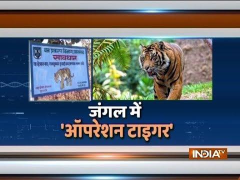 Maharashtra: Shoot-to kill-order for 'man-eating tiger' in Yavatmal